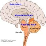 triune brain and stress